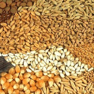 La Commissione Europea mette fuori legge semi e piante non omologate
