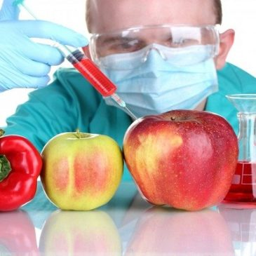Ultime ricerche – Scienziati scoprono correlazione tra OGM e leucemia