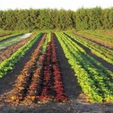 Appunti di agricoltura biologica
