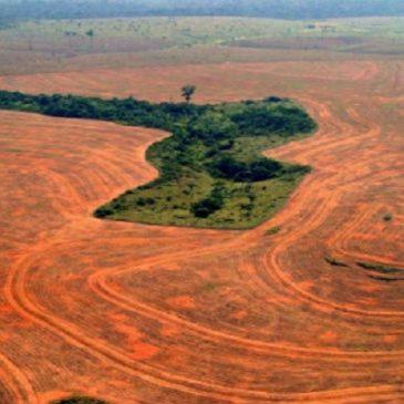 La deforestazione: quello che le multinazionali della carne non vogliono che tu sappia