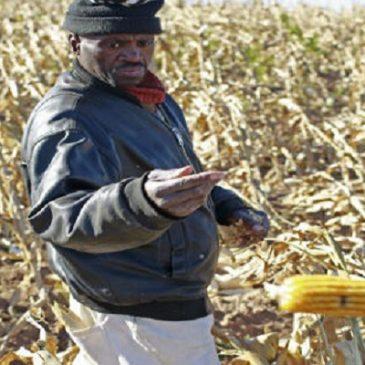 Anche gli agricoltori africani non vogliono gli OGM! Ecco perchè…