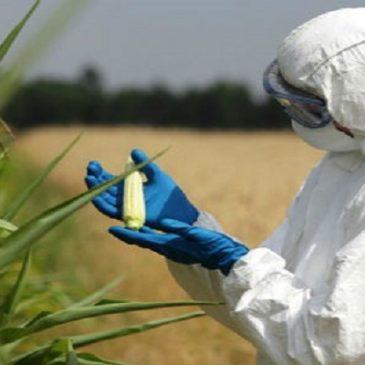 18 milioni di americani affetti da celiachia e disturbi intestinali: cibi OGM sul banco degli imputati