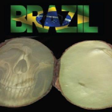 """Semi OGM """"terminator"""" in Brasile – Fermiamo questo crimine"""