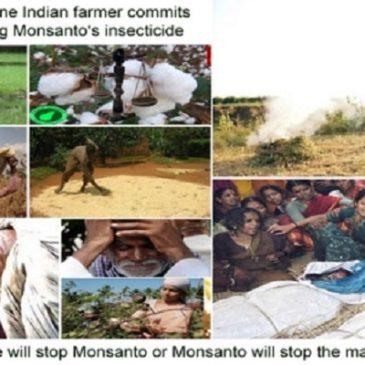 Cotone OGM: in India bandite le sementi di cotone  BT