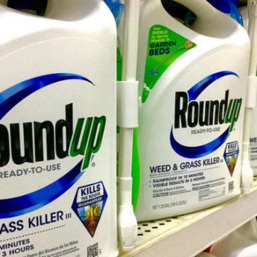 L'erbicida Roundup causa la celiachia e l'intolleranza al glutine
