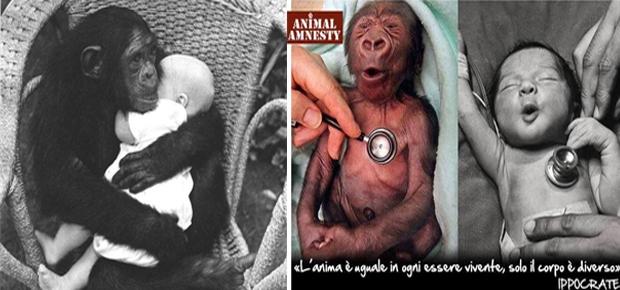 anima animali isha babaji - laviadiuscita.net