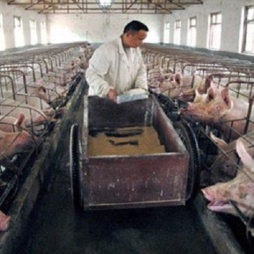 Perché non è Giusto mangiare la carne