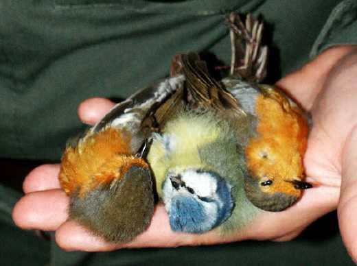 caccia uccelli crudeltà - laviadiuscita.net