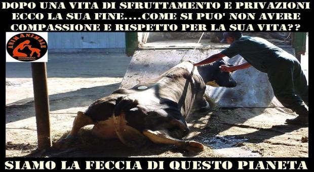 no a violenze su animali - laviaiuscita.net