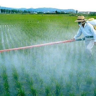 Drammatica conferma dall'OMS: i pesticidi sono cancerogeni, è accertato!!!