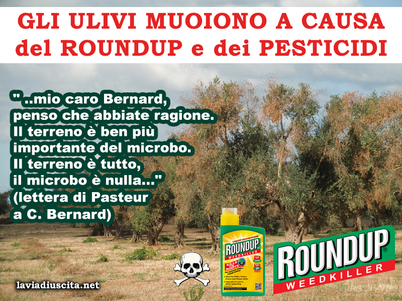 ulivi e roundup HD 16 copia