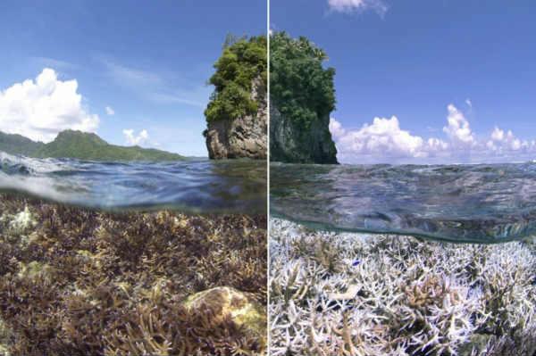 barriera-corallina-distrutta-laviadiuscita